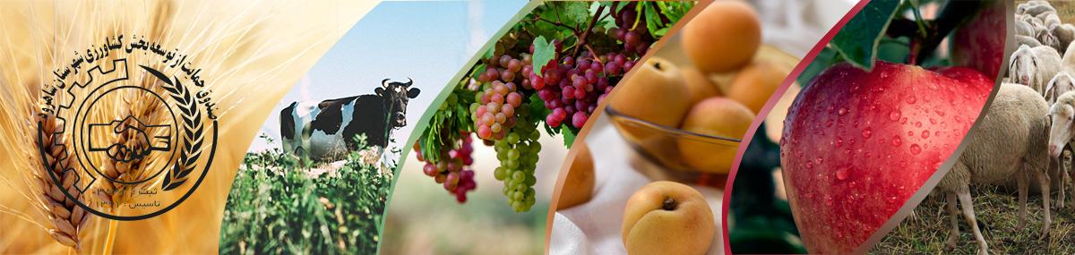 صندوق حمایت ازتوسعه بخش کشاورزی شهرستان شاهرود